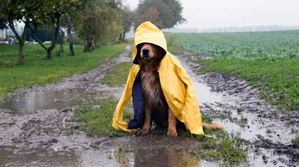 hund im regen1