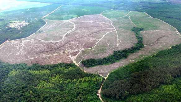 regenwald-palmc3b6l